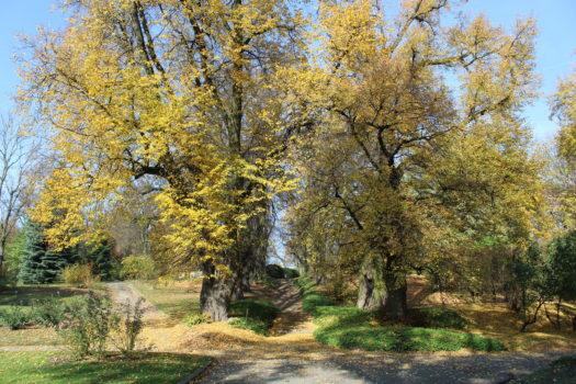 Ogród Botaniczny Uniwersytetu Marii Curie – Skłodowskiej w Lublinie